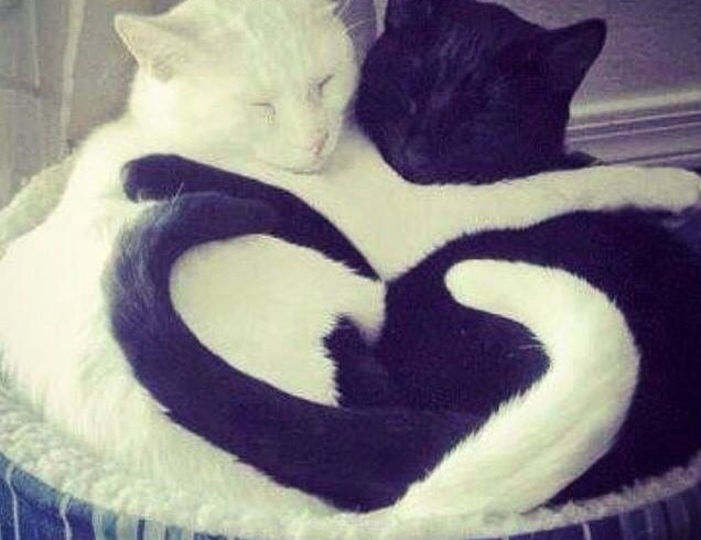 lovebwkitties.jpg